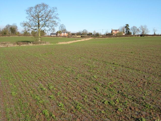 Arable land at Martley