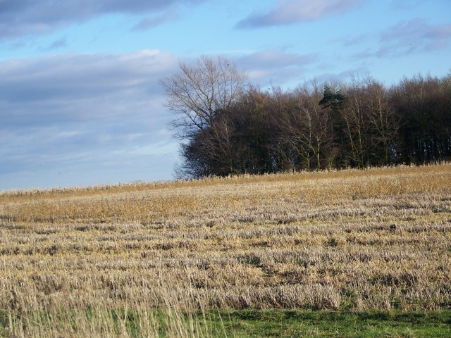 Stubble and game crop near Friars Hill