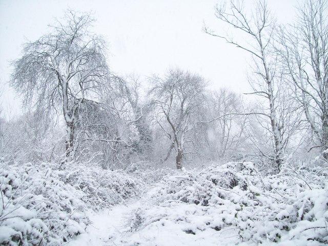 Winter trees in Aston-on-Trent