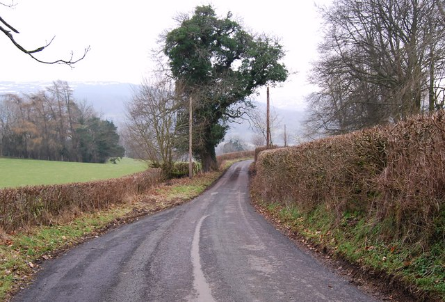 Lane with neatly trimmed hedges