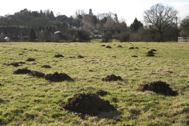 Molehills, Manor Farm