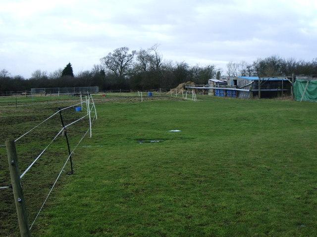 Paddock in field near Lilbourne