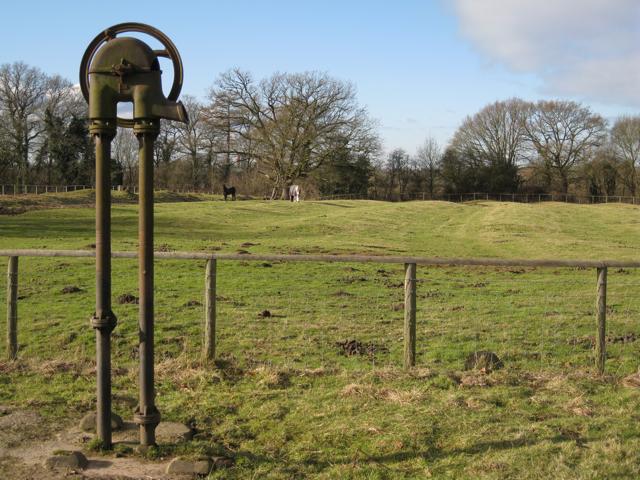 Paddock on ridge and furrow, Manor Farm