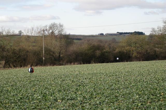 Bird-scarers, Manor Farm