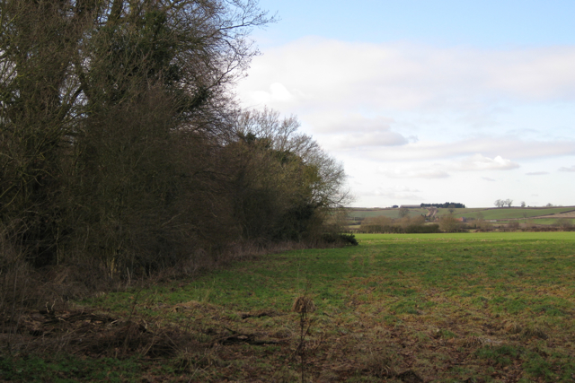 Neglected woodland north of Manor Farm