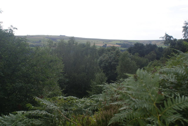 Tree tops in Foul Scout Wood