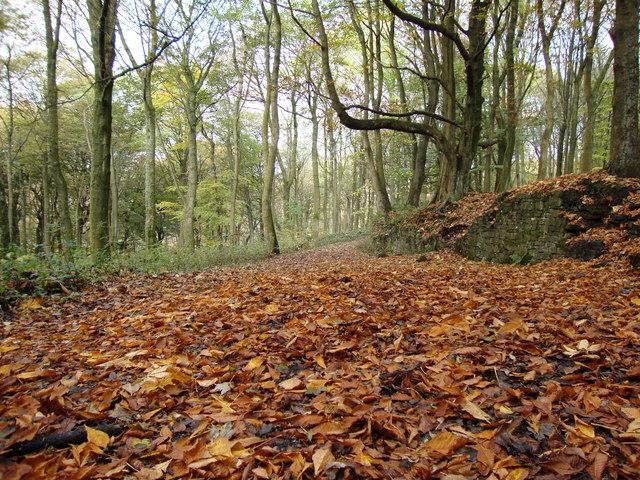Brinscall woods