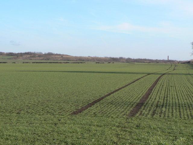 Landscape near Rowthorne