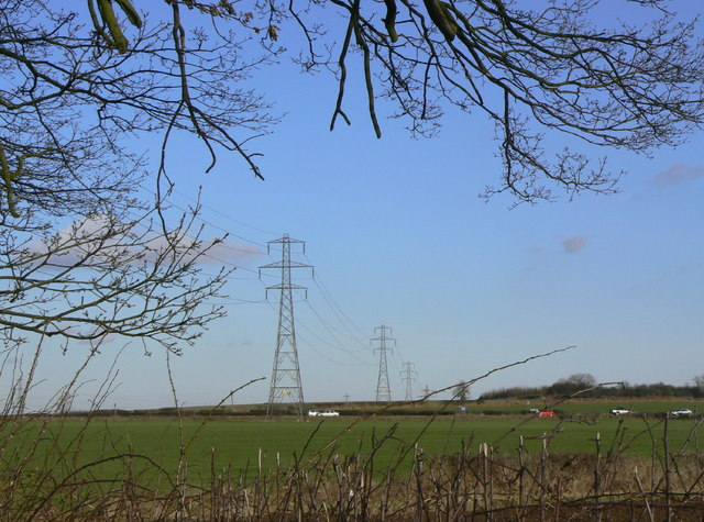 Tree and transmission lines