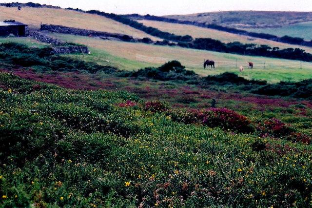 Mull Hill - Hillside scene west of Ballnahowe Road
