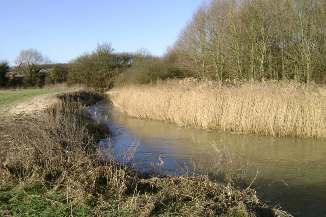 Reedbed by the Leam