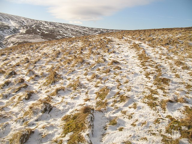 ATV track on Wooly Law
