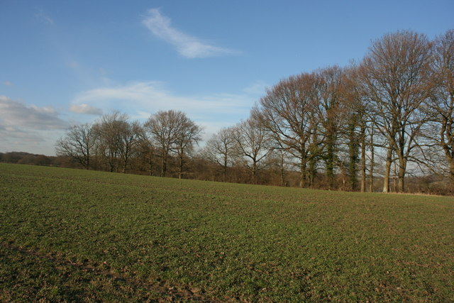 Marlpit Shaw from the High Weald Landscape Trail