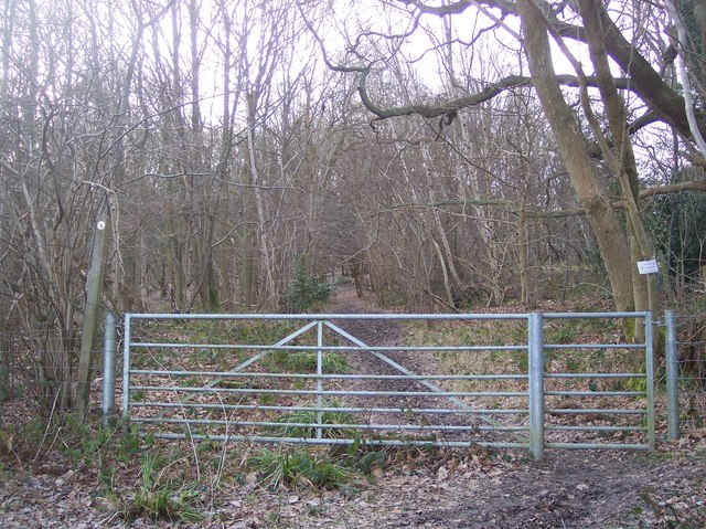 The Wealdway enters Waghorn's Wood