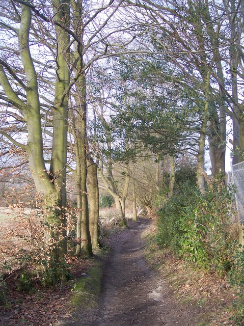 Footpath to Birch Wood