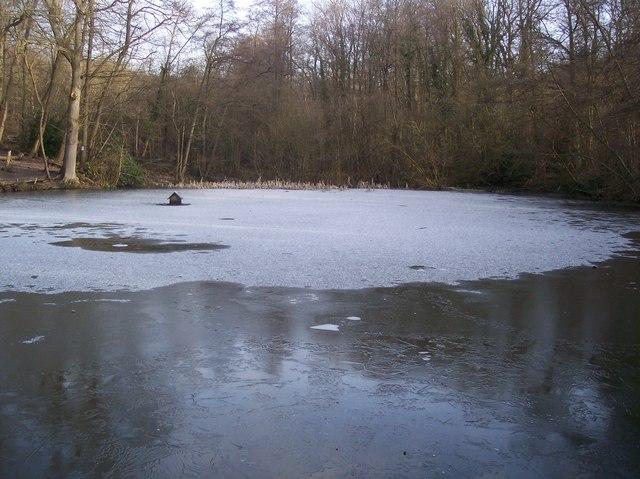 Frozen Pond in Birch Wood