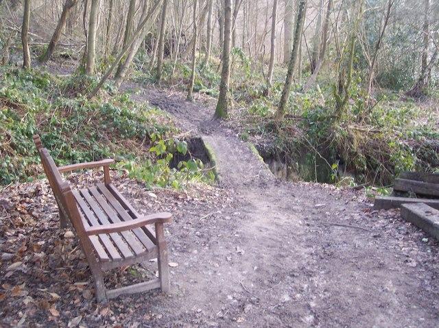 Bench and footbridge in Birch Wood