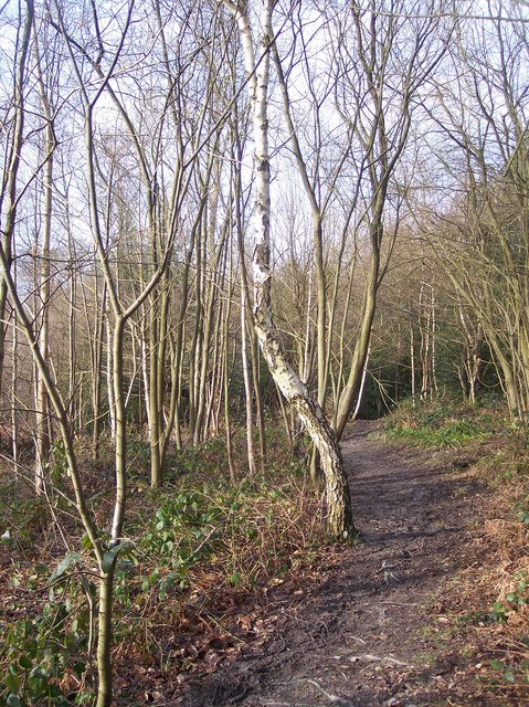 St Lawerence Trail in Birch Wood