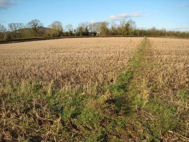 Footpath north of Martley