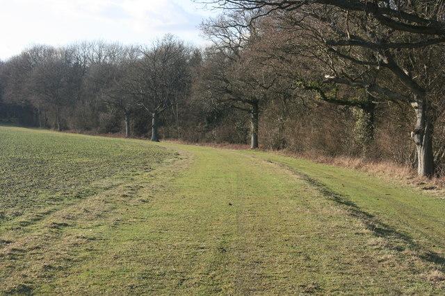 Headland Strip, Paupersdale Wood