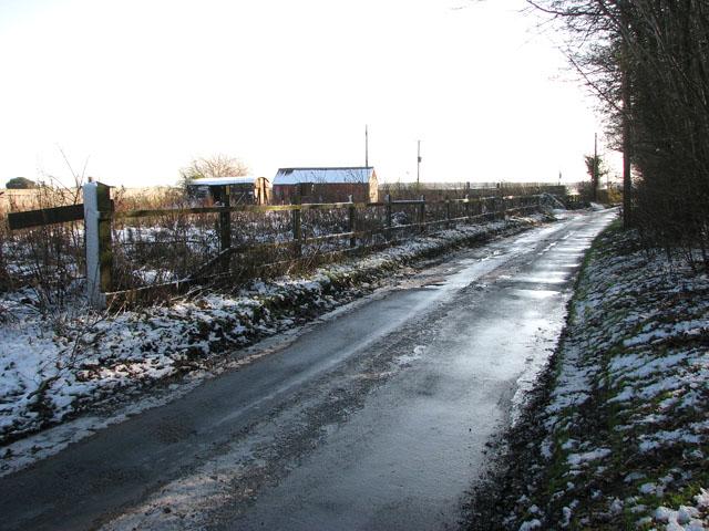 Shotesham Road past Beckett's Wood