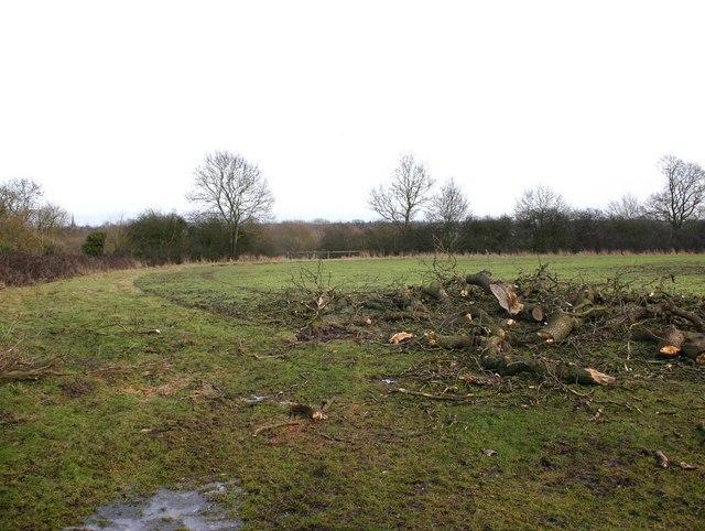 Field near Hampton Wood