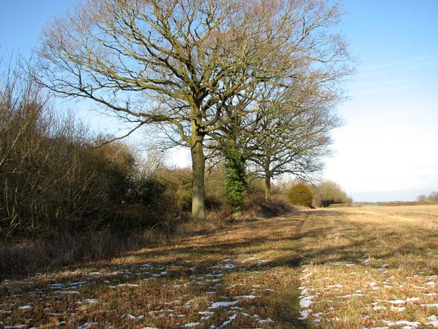 Field east of Hobb's Lane