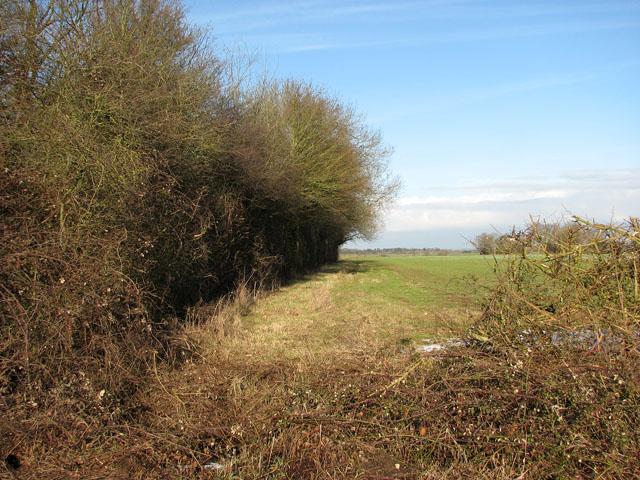 A tall hedge