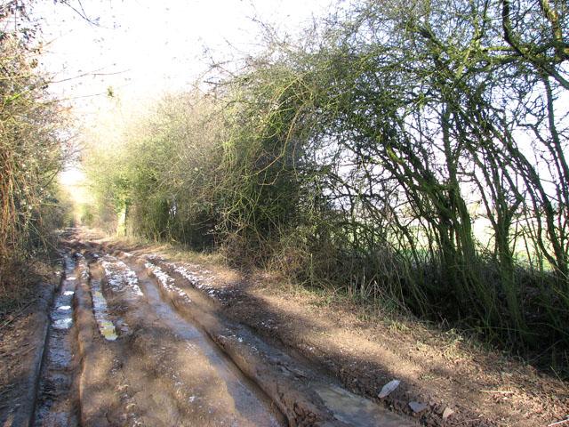 Frozen puddles on Hobb's Lane