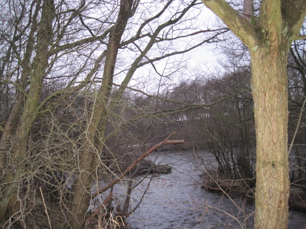 The Confluence of the Hareshaw Burn and the River North Tyne