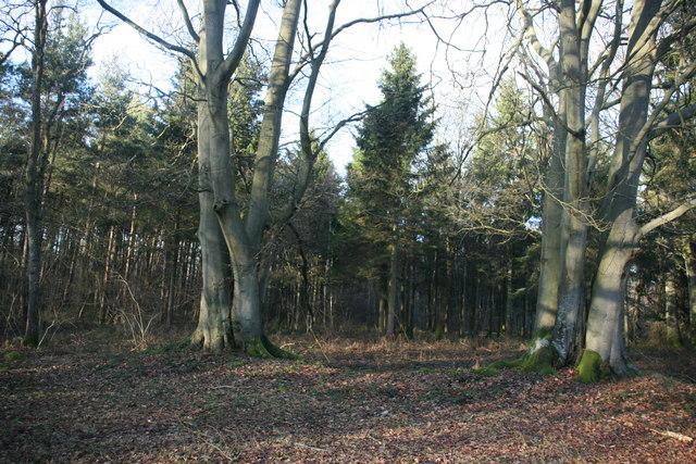 Paupersdale Wood