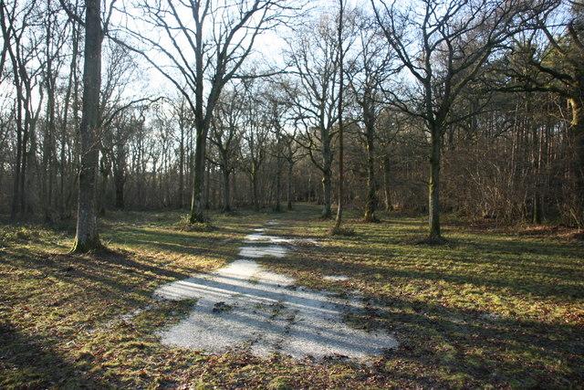 High Weald Landscape Trail through Collingsbush Wood (3)