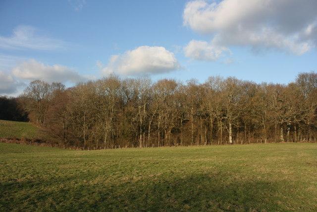 Pollard Wood