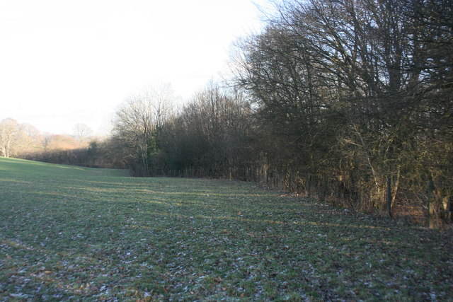 The edge of Highams Wood