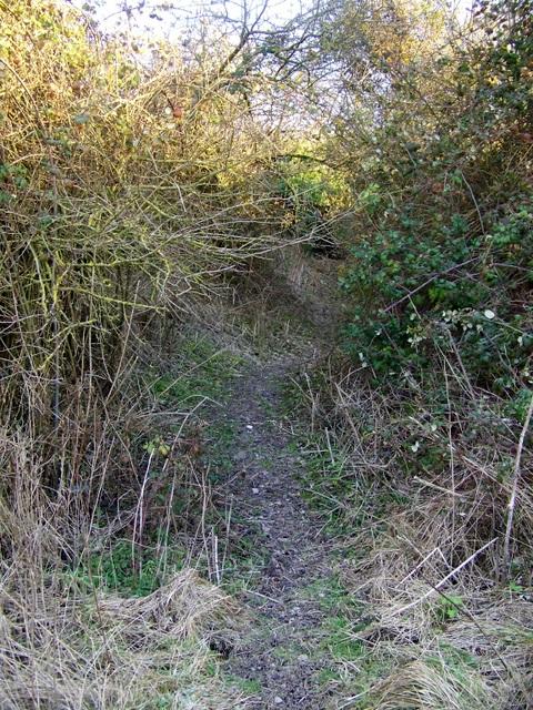 Bridleway near Ashbury