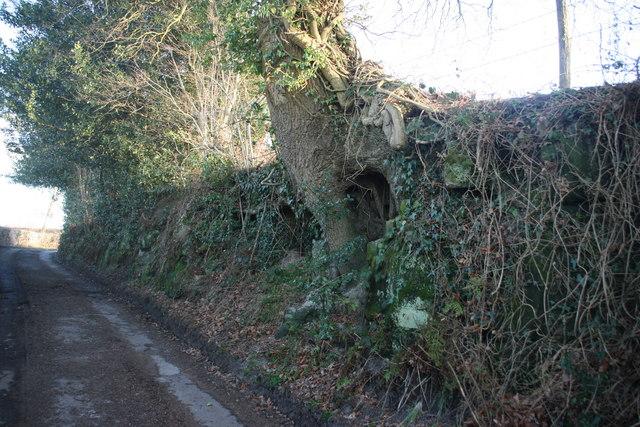 Outcrop of Tunbridge Wells Sandstone, Cansiron Lane
