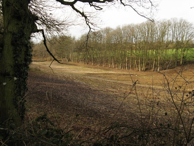Small wood at the northern edge of West Chiltington golf course