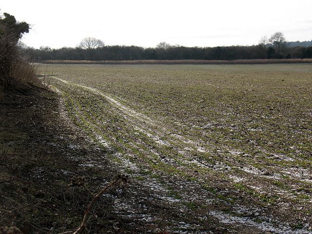 Frosty field edge