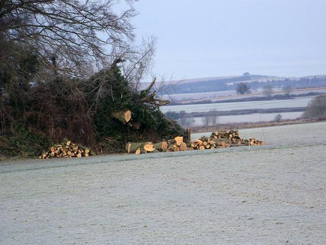 Logging work near Wimborne St Giles