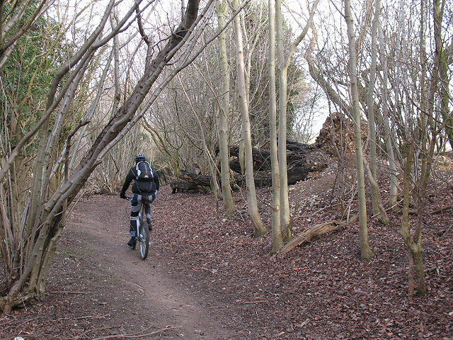 Mountain biker in Downs View Wood