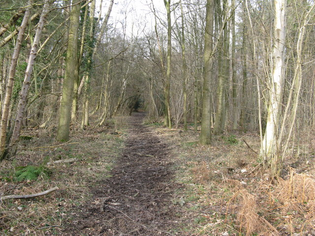Footpath in Woodshill Copse