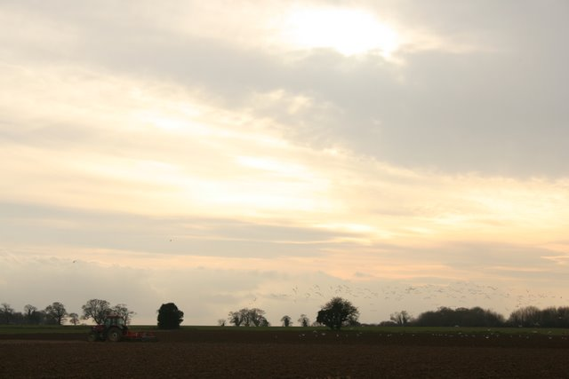Ploughing, off Smallburgh Road