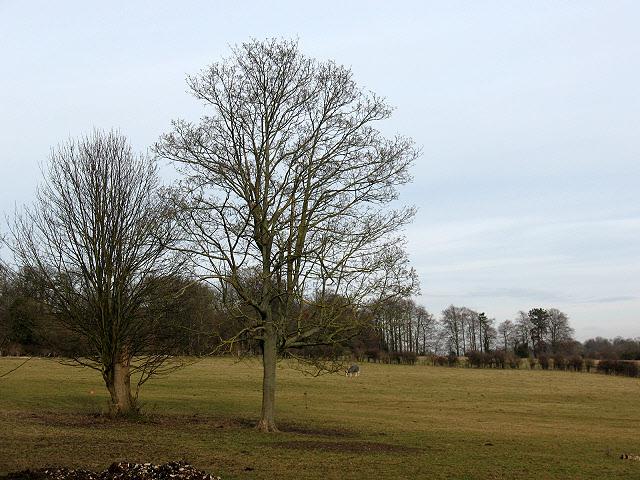 Field with trees at Hurst Farm