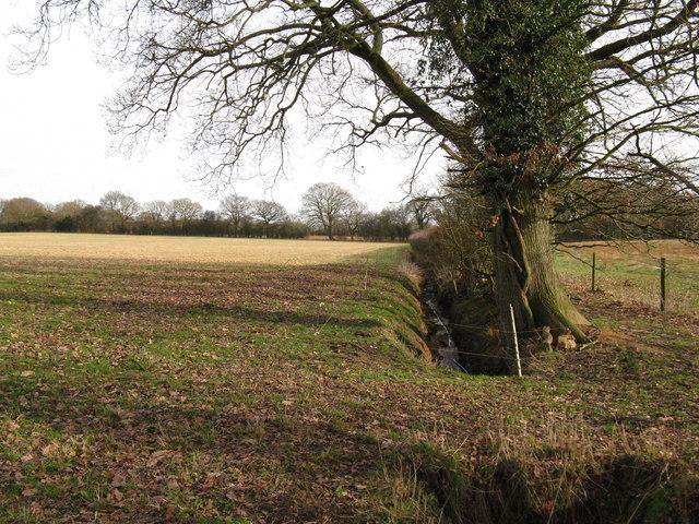 Drainage ditch by footpath at Gay Street Farm
