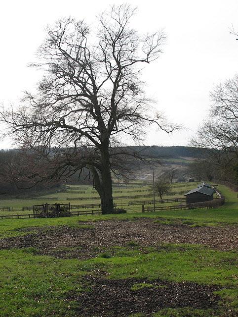 Mid Surrey Pony Club (2)