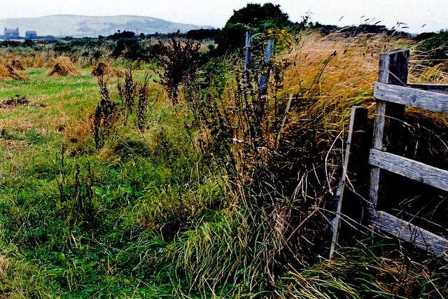 Cregneash Village - Church Farm field