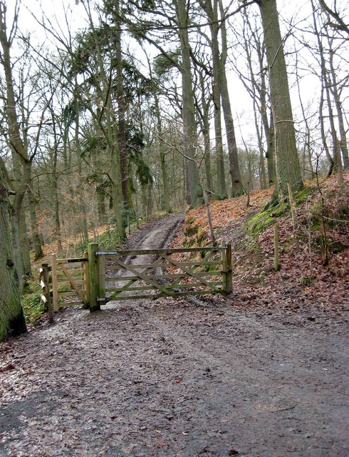 Track from car park into Wyre Forest