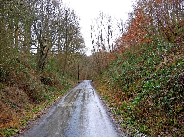 Forestry road on route of former railway in Wyre Forest