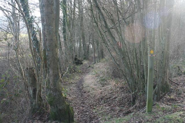 Vanguard Way in Spanden Wood