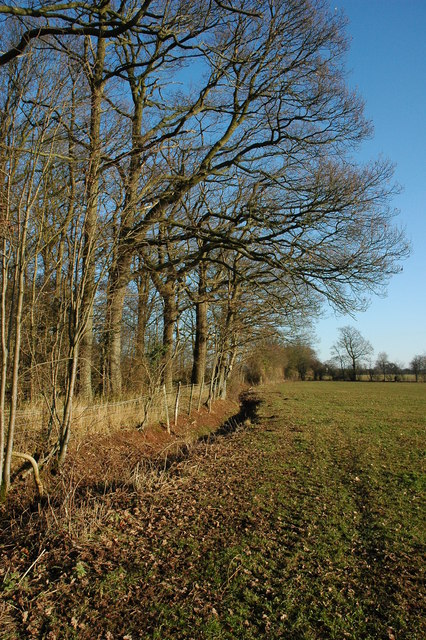 Hedgerow near Broad Green